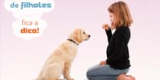 adestramento-filhotes-fabuloso-mundo-pets